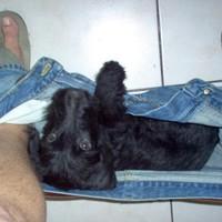 Letolt nadrágba került egy egészen kicsi kutya