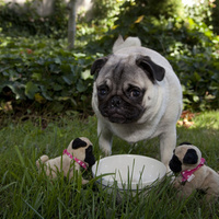 Jenny kutya imád anyuka lenni