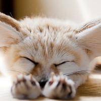 Aludni bárhol jó!