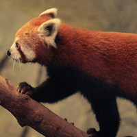 Bangkok Zoo IV.: a kedvencünk