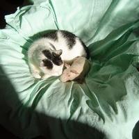 Bálint-napi párok: macska és csupasz malac