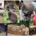 Állatkerti visszatekintés