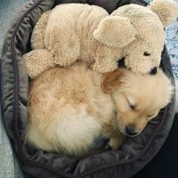 Mert a kölyök kutyusoknak is kell egy alvótárs
