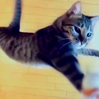 Cica, hopp!