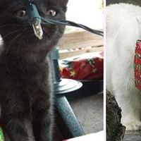 Ünnepi pályázat: nyerjen cuki tárgyakat karácsonyra!