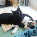 Ez a lengyel nővércica ápolja a többi beteg állatot