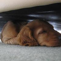 Alvó és/vagy téli állat: így szundikál Charlie és Chester