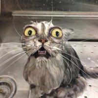A macskák nem szeretik a vizet!