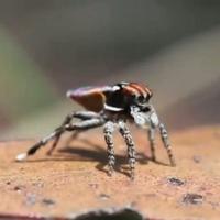 A pók is lehet cuki, de tényleg!