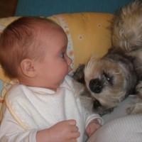 Döbbent kisbabával súlyosbított cuki kutya