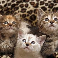 Nagyon csodálkozó macskagyerekek