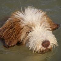 Ez itt egy úszástól vizes Hippi