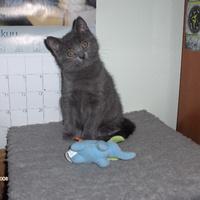 Macskát döbbentett a kék elefánt