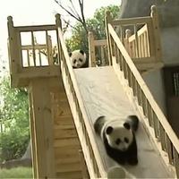 Napi panda adag