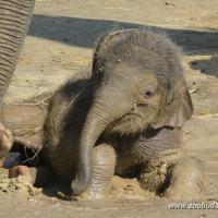Asha két hónapos
