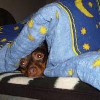 Alvó és/vagy téli állat: fázós Vacak a hatalmas ágyon
