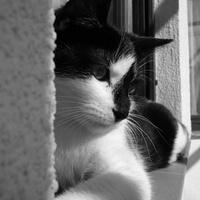 Mesi cica emlékére