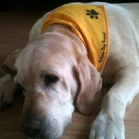 Sárga szalag egy kutyán? Elmondjuk mit jelent...
