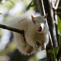 Ritka fehér mókust találtak Fokvárosban