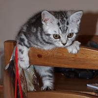 Macska mászik vicces fejjel