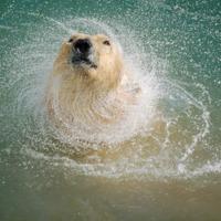 Zora, a jegesmedvelány
