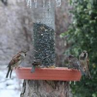 Mentse meg a madarak életét, de ne morzsával!