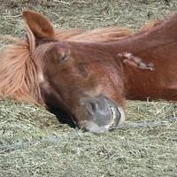 Loboncos lovak lazulnak lelkesen
