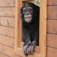 Topmodell a győri állatkertből