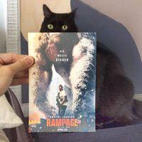 Macskák találkozása ikonikus filmek plakátjaival