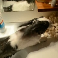 Nyuszis fürdő