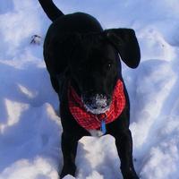 Alvó és/vagy téli állat: nagyon örült a hónak a kutya
