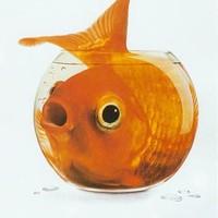 Egy hal sem lakhat gömbakváriumban
