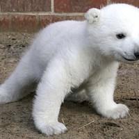 Karácsonyig három testvére születik Knutnak?