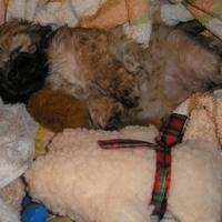 Válogassa ki a takaró közül a kutyát!