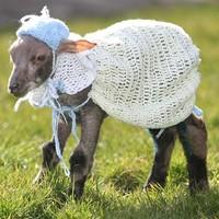 Főkötőt és kardigánt kapott a kopasz bárány