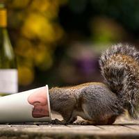 A 20 legjobb kép, amit valaha a mókusokról láttál!