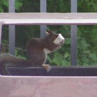 Mohó mókus fal
