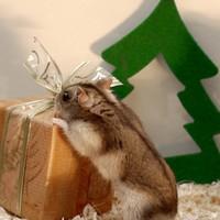 Szavazzon! Melyik a legcukibb karácsonyi állat?