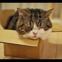 Marut nem lehet dobozfüggésben űberelni
