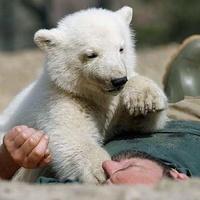Jobban van Knut: a szemfoga miatt voltak fájdalmai