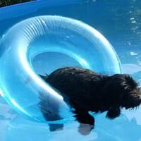 Kutyának látszó strandoló a medencében
