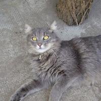 Koszban hempergő macska lett a novemberi sztár