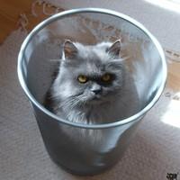 Szemét macska, macska szemét