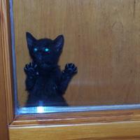 Szita cica beszorult