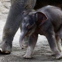 Egy elefánt első éve 2 percben