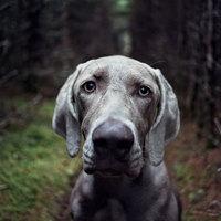 Öreg kutya nem vén kutya