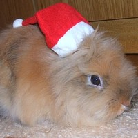 Szavazzon 2008 karácsonyi cuki állatára!
