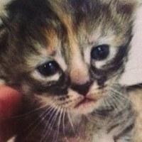 A világ legszomorúbb macskája