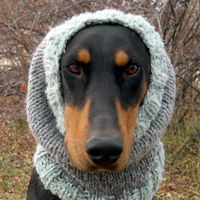 A legdögösebb bánatos arcú kutyafotómodell