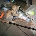 Macskát fogott a Dunából egy horgász
